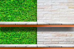 Wooden shelves with fresh green small plants and brick background Stock Image
