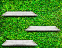 Wooden shelves with fresh green small plants and brick background Stock Images