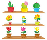 Wooden shelves with ornamental plants Royalty Free Stock Photos