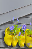 Wooden shoes Klomp like flowerpots with flowers Stock Photos