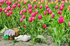 Wooden shoes in tulip garden Stock Images