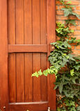 Wooden shutter and ivy Royalty Free Stock Photo