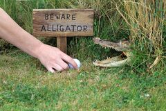 A Wooden Sign. Beware Of Alligator