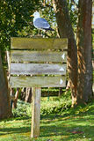 Wooden sign with bird Stock Photography