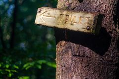 Wooden Sign on Tree Trunk, Arrow and `Toilet` stock image