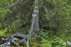Wooden sign indicative of information on the live tree for walkers from rest-house Maliovitsa in   Rila mountain Royalty Free Stock Photo
