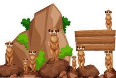 Wooden sign with meerkats on the rock Stock Images