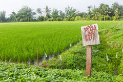 Wooden sign in rice fields. Wooden sign text for stop and green  rice fields  in village Royalty Free Stock Images