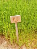 Wooden sign on short column at field with herbs. Mark of flowers painted on wooden table. traditional garden with herbs. Stock Image