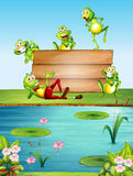 Wooden sign template with many frogs by the pond Royalty Free Stock Photo