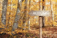 Wooden signpost and Beautiful autumn colors of nature.  royalty free stock photo
