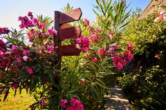 Wooden arrow shaped signpost surrounded with colorful flowers. Wooden signpost surruonded with colorful flowers in a garden on a sunny summer day royalty free stock photo