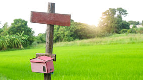 Wooden Signs and mail box hold wooden post on cornfield Stock Photos