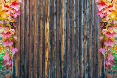 Wooden slats texture framed with autumnal colored vine leaves. Used for advertising royalty free stock photos