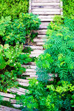 Wooden sleepers path in the garden Royalty Free Stock Photo