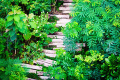 Wooden sleepers path in the garden Royalty Free Stock Photography