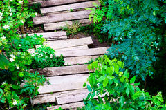 Wooden sleepers path in the garden Stock Photos