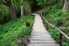 Wooden slope down walkway with handrail in the jungle. Background stock photo