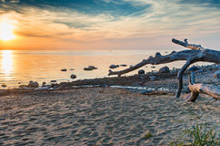 Wooden snag at a beach of the Baltic Sea, sunset Stock Image