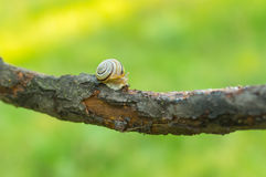 Wooden snail on an old tree branch. At summer season Stock Photography