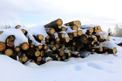 Wooden logs in winter forest Royalty Free Stock Image