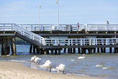 Wooden Sopot pier in sunny day, swans on the sandy beach, Sopot, Poland. SOPOT, POLAND - JUNE 6, 2018: Wooden Sopot pier in sunny day. It is the longest wooden stock images