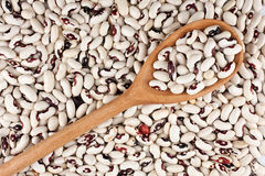 Wooden spoon with beans Stock Photos