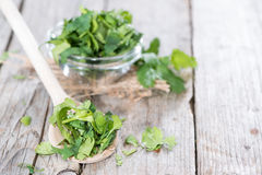 Wooden Spoon with Coriander Royalty Free Stock Photos