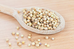 Wooden spoon filled with coriander seeds Stock Photo