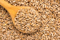 Wooden Spoon Filled With Wheat Seeds Stock Image