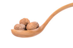 Wooden spoon full with walnuts Royalty Free Stock Photos