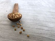Front on view of Wooden spoon with buckwheat spilling out of it. A wooden spoon on a grey countertop with buckwheat  spilling out of it Royalty Free Stock Photos