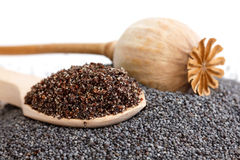 Wooden spoon with ground poppy seeds, pod, and whole seeds. Stock Images