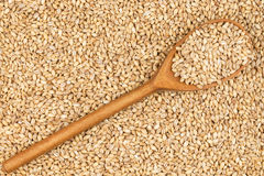 Wooden spoon with pearl barley Stock Photo