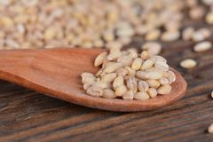 Wooden spoon with pearl barley Stock Image