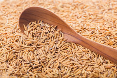 Wooden spoon on pile of paddy rice Royalty Free Stock Photography