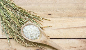 Wooden spoon with rice and paddy pile on wood Royalty Free Stock Photography