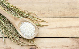 Wooden spoon with rice and paddy pile on wood Royalty Free Stock Images