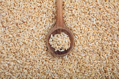 Wooden spoon on unrefined rice background Stock Photos