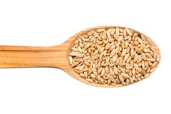 Wooden Spoon With Wheat Grains Royalty Free Stock Photography