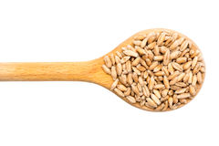 Wooden Spoon With Wheat Grains Stock Image