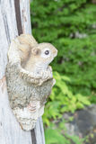 Wooden squirrel stock photography