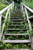 Wooden staircase. Looking up wooden staircase in country park Royalty Free Stock Photo