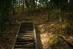 A wooden staircase in the autumn forest of the Chertovo Settlement reserve in the Kaluga region. royalty free stock image