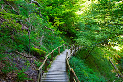 The wooden staircase in a forest Stock Photography