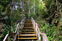 Wooden staircase leads into rain forest Stock Photography