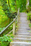 The wooden staircase in the mountains. A wooden staircase leads up near a tree Royalty Free Stock Images