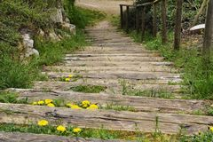 Wooden staircase. Overgrown with grass and dandelions Royalty Free Stock Images