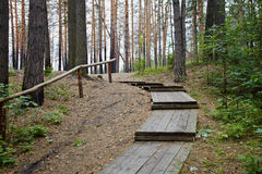 Wooden staircase in pine forest Royalty Free Stock Photo
