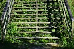 Wooden staircase with vegetation stock photos